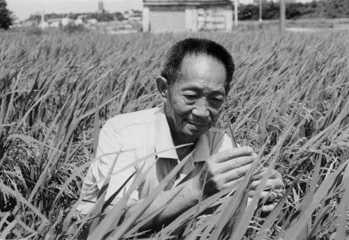 """沉重悼念!""""杂交水稻之父""""袁隆平逝世,那个""""让天下人都吃饱饭"""