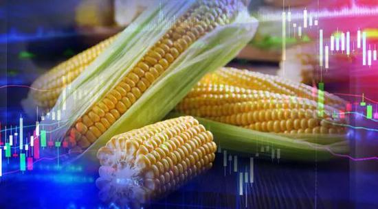 """玉米也""""疯狂""""?期货价格走出6年新高 一吨进口玉米利润100美元"""