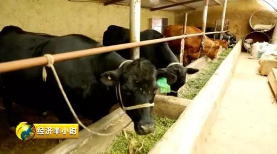 马全龙家的新牛棚