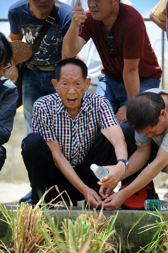 ▲原料图片:2014年5月10日,杂交水稻行家袁隆平(中)在。现场请示测量稻田面积。(新华社)
