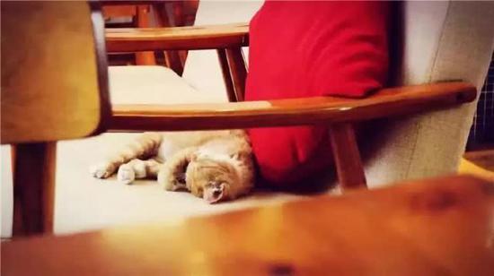 喜欢猫咪的人们也经常到这样的店里坐坐。