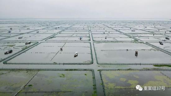 ▲2019年9月4日,江苏省苏州市阳澄湖大闸蟹养殖区,成片的围网将水域格成方块。当地介绍,为保护水质,阳澄湖养殖面积已逐年减少。