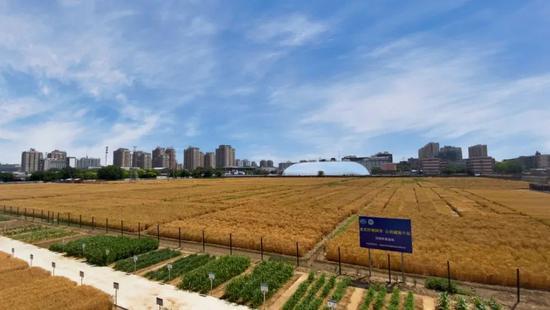 在房子均价6万的北京三环 为什么用150亩种麦子?