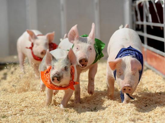 万洲国际:国内猪价下跌促使中国猪肉进口量下滑