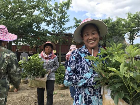 图说:碧桂园扶贫基地的苗木已经出苗,基地工作人员正在采摘。