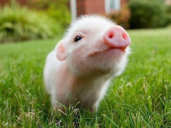 猪价助推10月CPI上涨3.8% 不存在全面通胀风险
