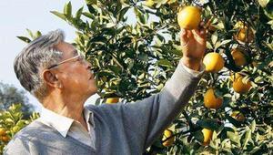 褚时健夫人马静芬:今年褚橙卖了两万多吨