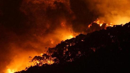 澳大利亞首都宣布進入緊急狀態 火災已蔓延到185平方公里