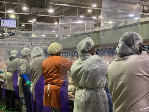 圖爲已採用隔離處理的泰森公司肉類處理現場