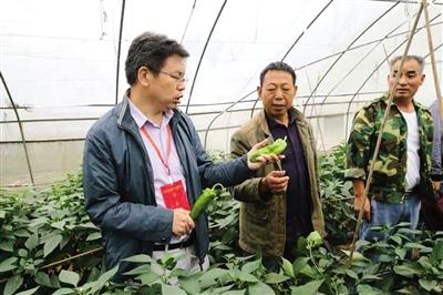 图为专家人才在为村民培训蔬菜种植技术。重庆市人社局 供图