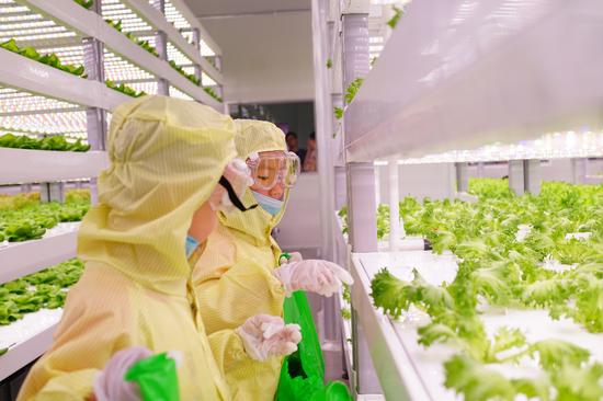 植物梦工厂里的未来科学家