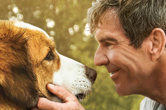 《一条狗的使命2》超前鉴赏 被赞今夏最强催泪弹