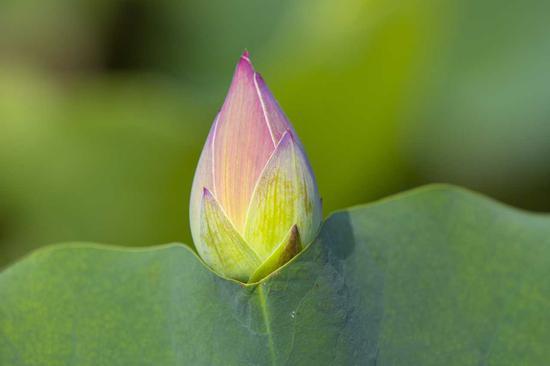 四禅八定在佛经里面讲的地方很多,因为语言定义的关系很难理解。(摄影:海朝)