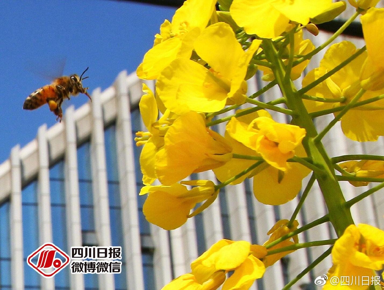 世卫组织:这场全球行动,期待中国科学家发挥重要作用