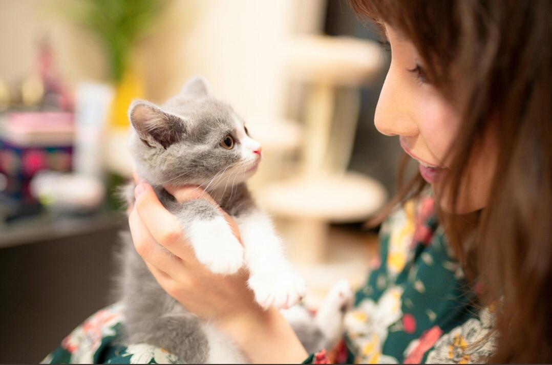 25岁彩美旬果收养流浪猫,白石茉莉奈点赞!