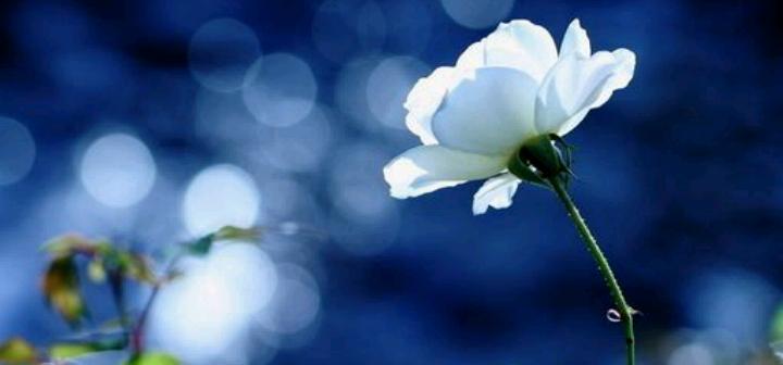 散文:生命是悬崖上开出的杜鹃花