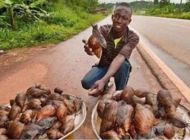 偷拍非洲人_非洲人很嫌弃的一种肉,卖的比白菜便宜,而中国却不够吃!