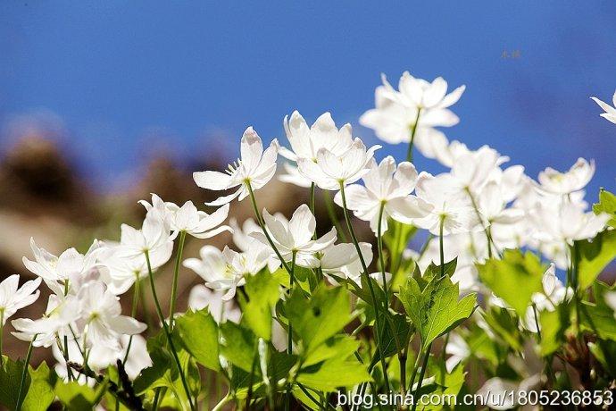 峭壁上的花仙子