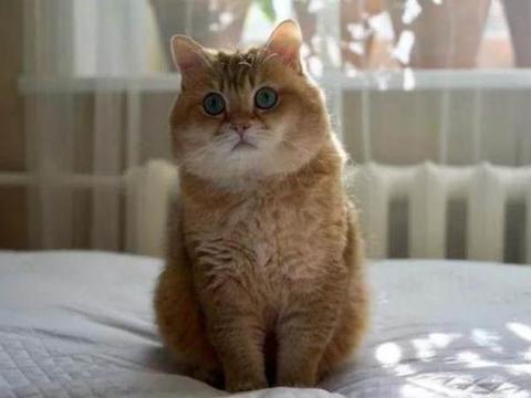 猫????9d
