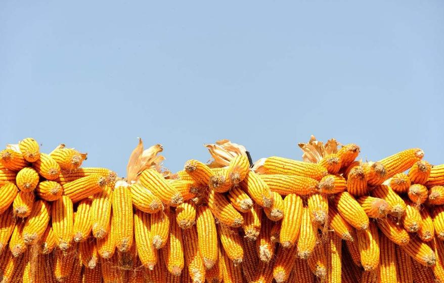 不断优化农业结构 持续提高群众收益
