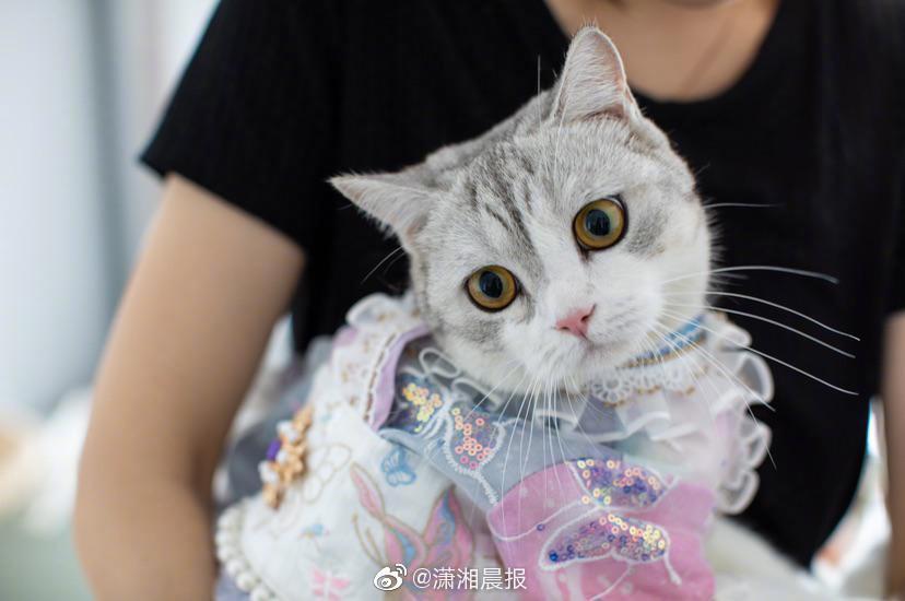 湖南90后女孩辞职给猫做汉服 月收入超7万