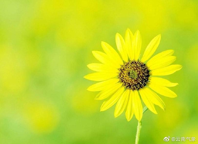 06月16日08时云南省未来24小时天气预报