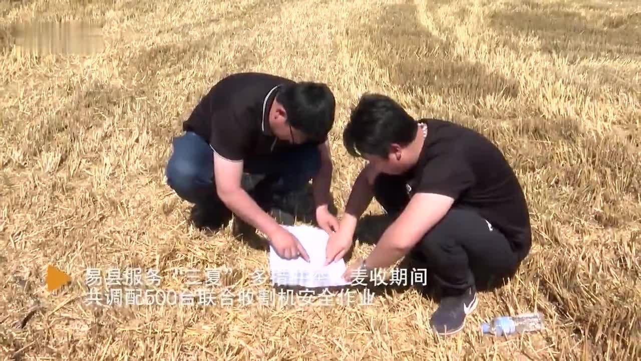 微视频|河北易县:小麦抢收 颗粒归仓
