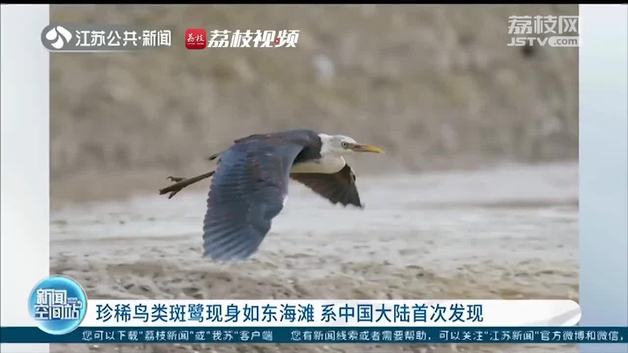 中国大陆首次发现珍稀鸟类斑鹭 专家:可能是迷途之鸟