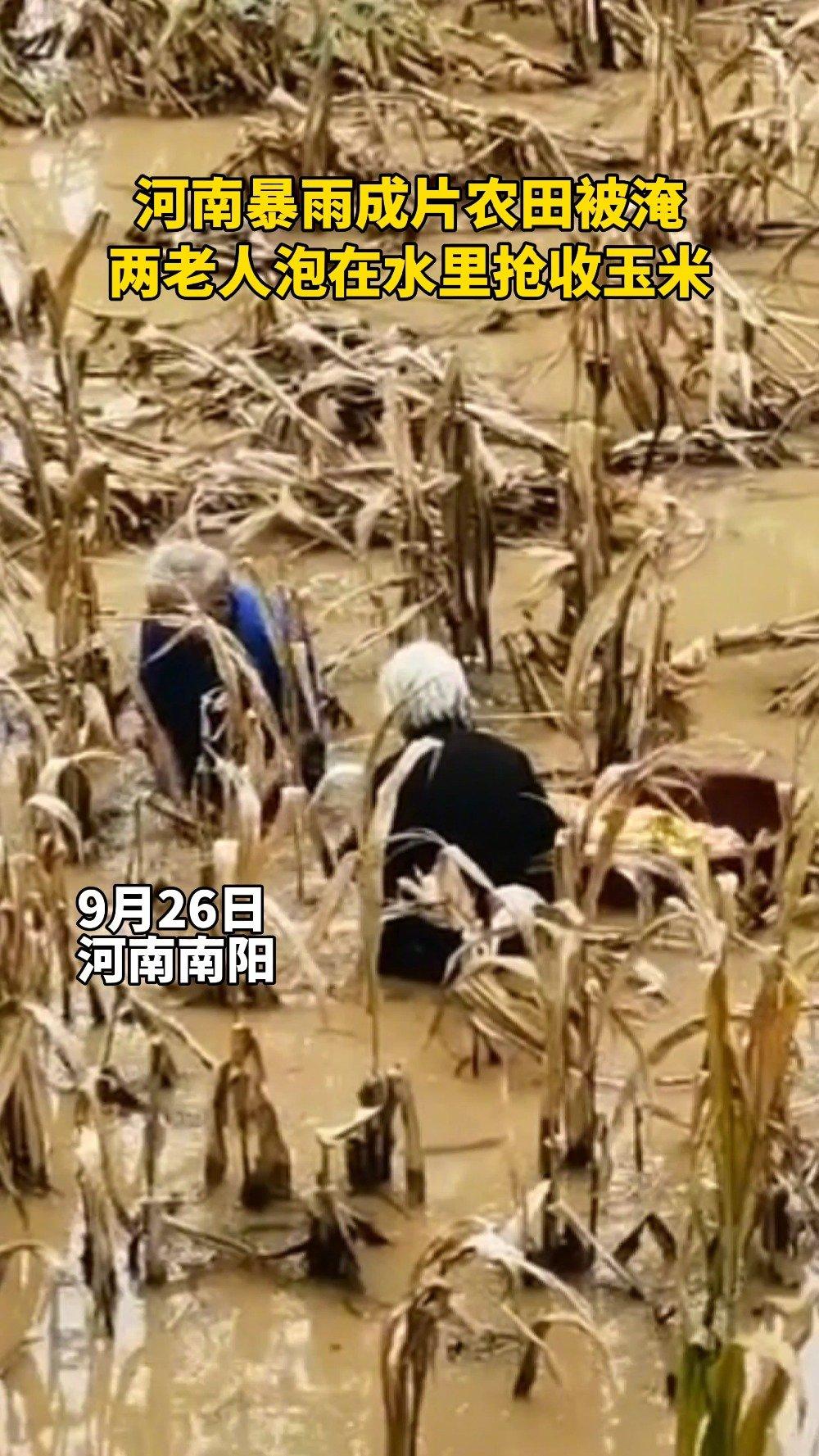 粮食来之不易!两位老人1米深积水中抢收玉米