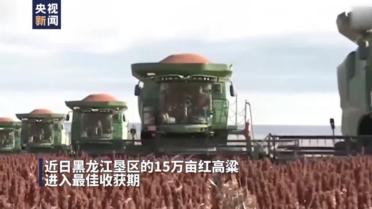 壮观!39台机械齐上阵 15万亩高粱迎丰收