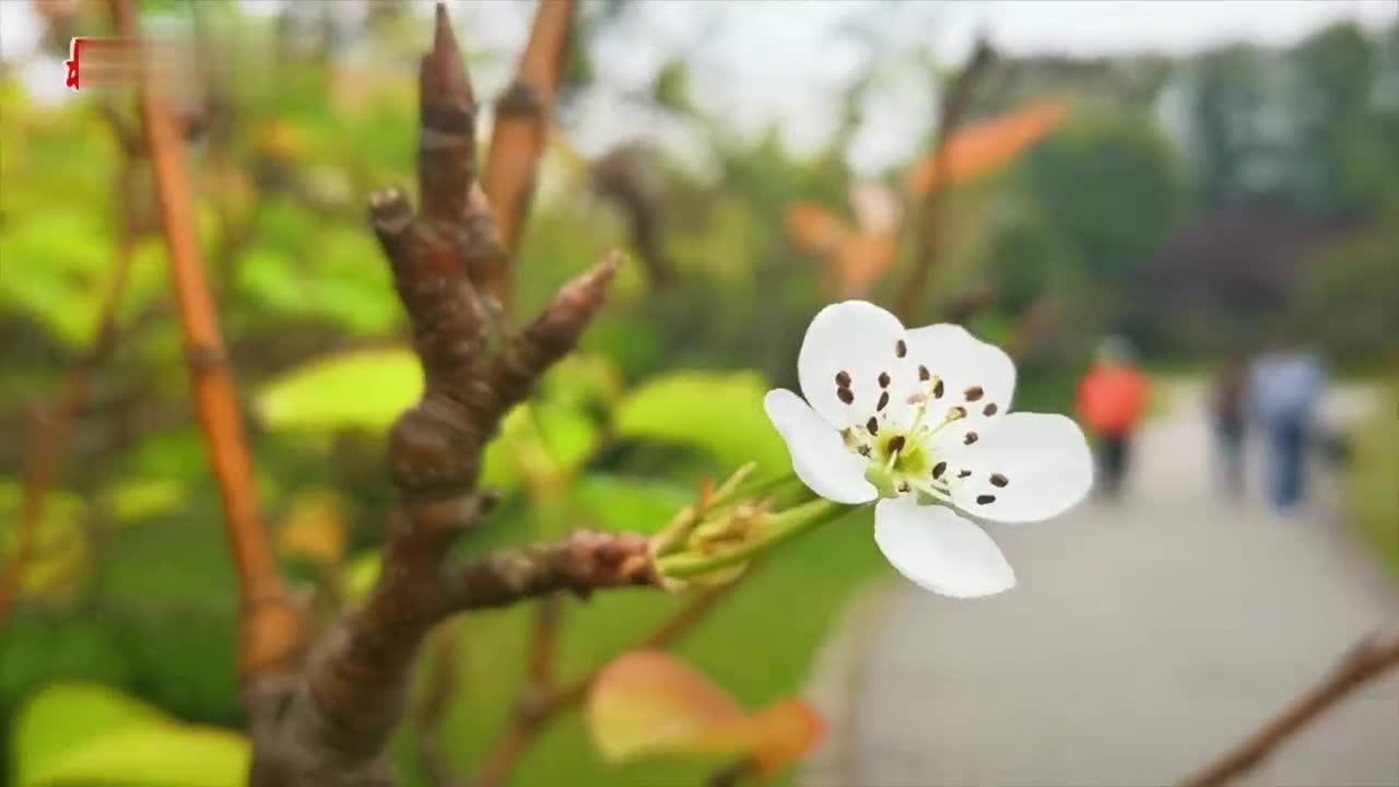 上海春花深秋反季开放