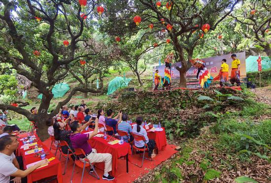 樟木头裕丰社区3棵观音绿古树采摘权拍卖得17.8万元