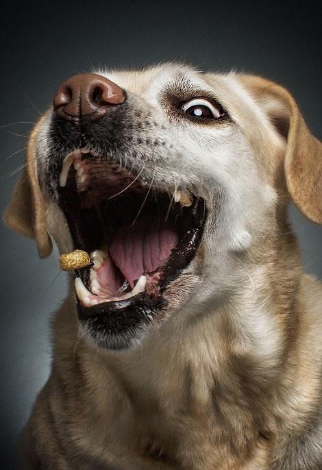 狗狗视频大全搞笑_狗狗的搞笑的表情图片