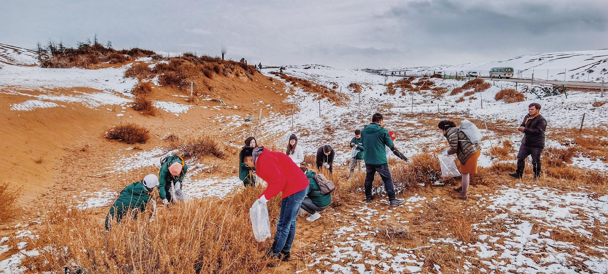喜玛拉登沙山采集黑沙蒿种子