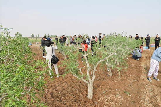 参加2019年项目春种探访的人员实地考察枸杞苗木培育情况
