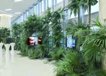 绿植与缓和医疗影像结合的艺术行动装置