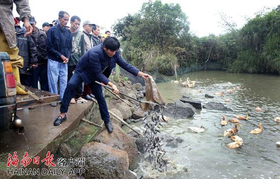 海口美仁坡农民为来访白鹈鹕投放500斤鱼苗