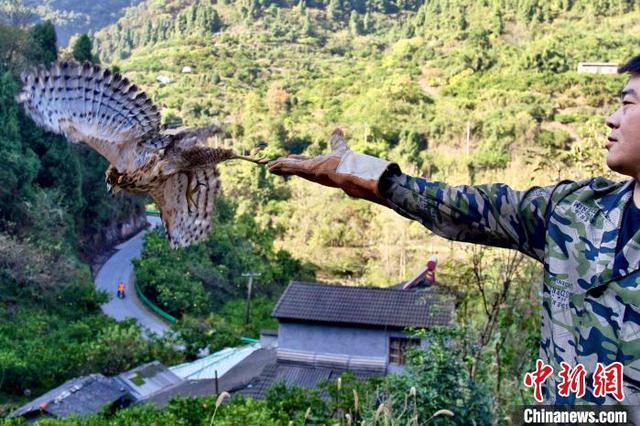 湖北宜昌放生紅腹錦雞等一批救助野生動物