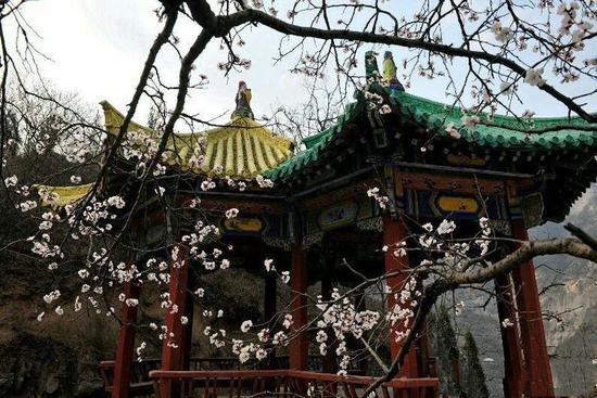 桃花朵朵开 慈云踏春来 青龙山慈云寺景区第六届桃花节本月举行