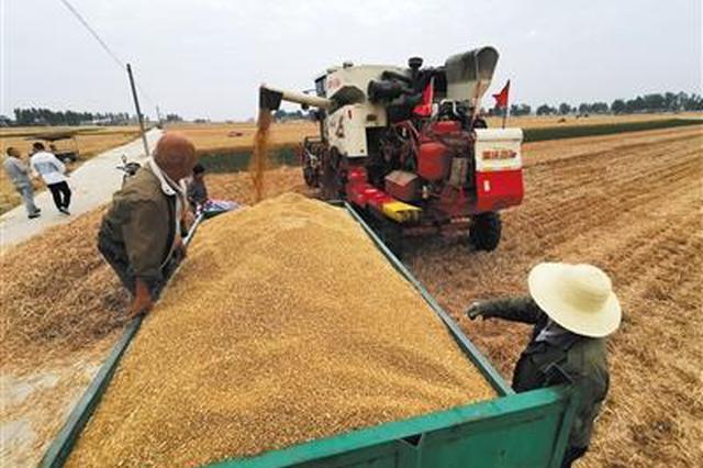 河南省7月2日启动2019年小麦最低?#23637;?#20215;执?#24615;?#26696;