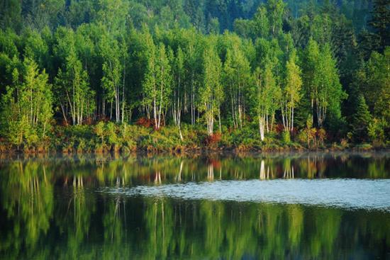 伊春汤旺河国家森林公园