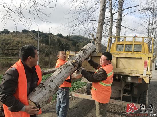迅速清理倒伏树木,确保公路路面畅通。