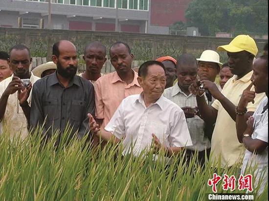 袁隆平在田间指导非洲学员。