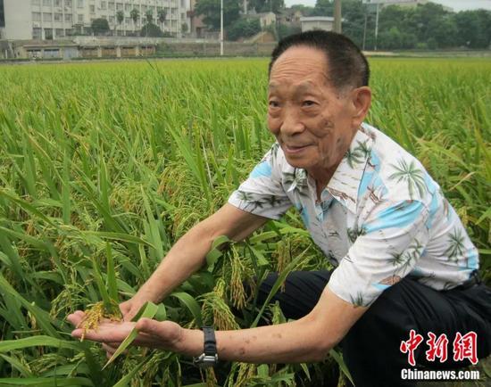 2010年,袁隆平在杂交水稻试验田