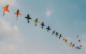 追逐风筝肆意自由 小心你手中的那根线