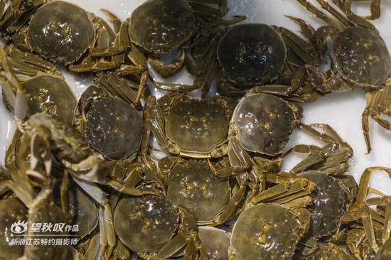 斑的位置固)�_快来吃纯正固城湖螃蟹!