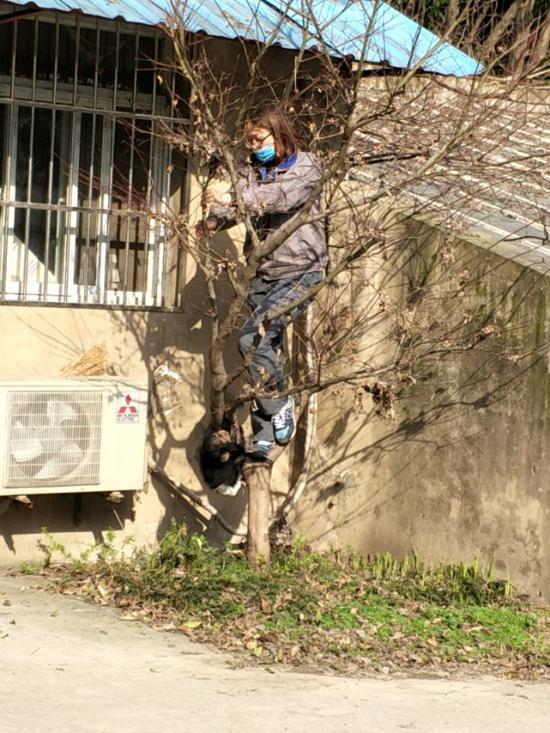 还有饲养员带它爬树做康复训练。