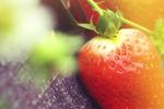 草莓测评:这就是草莓!