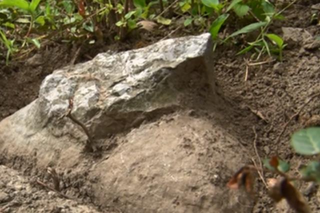 江宁玉米地旁发现石刻 初步判定属于明代陵墓神道