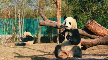 快来南京泡温泉、撸熊猫吧!